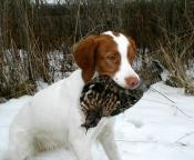 Dutchess with grouse