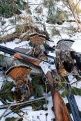 Trio of Grouse